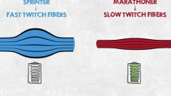 Sprinter VS Marathoner Explained