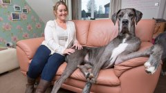Britain's Biggest Dog