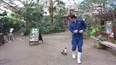 Penguin Chasing After Zookeeper