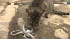 Cat vs. Octopus