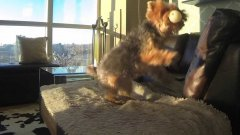 Dog is Adorably Terrible At Catch (in Slow Motion)