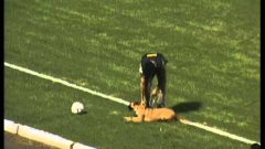 Police Dog Steals Ball At Soccer Game