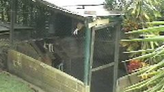 Dog Climbs Fence To Escape Cage