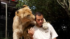 Man Hugging, Cuddling With Two Lions