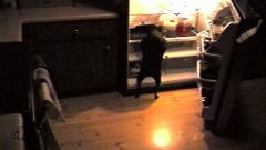 Dog Open Fridge, Takes Pizza