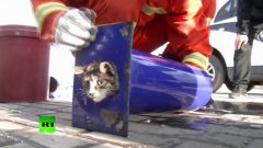 Firefighters Save Kitten Stuck In Pipe