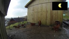 Chickens thought it was night time during the solar eclipse