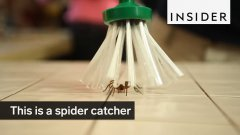 Spider catcher