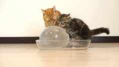 Cats and ice ball