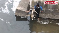 A Dog's Being Saved and it's reaction after that