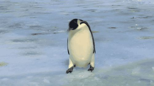 Penguin fail