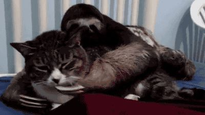 Sloth loves cuddling with a cat