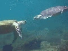 Turtle high five