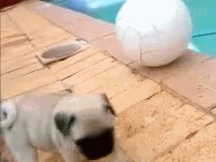 Puppy falls in hole
