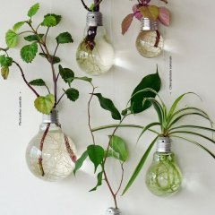 Decorative Plants From Old Light Bulbs