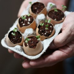 Planting Seeds Using Eggshells