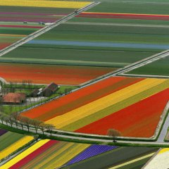 Netherlands' Technicolor Tulip Fields