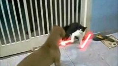 Jedi Cat Battles Dogs