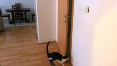 Cat open five doors to go outside