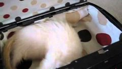 Ferret Inside PS3, Playstation 3 Case