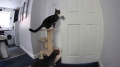 Cat opens door to escape kitchen with dog