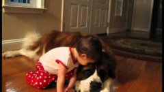 Toddler Hugs And Cuddles Giant St. Bernard