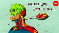 How Sugar Affects The Brain Animation