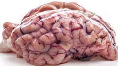 7 Common Myths About The Brain