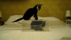 Kitten Can't Get To Cat In Plastic Box