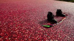 Wake Boarding In Cranberries